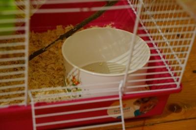 Купалка с песком для хомяка